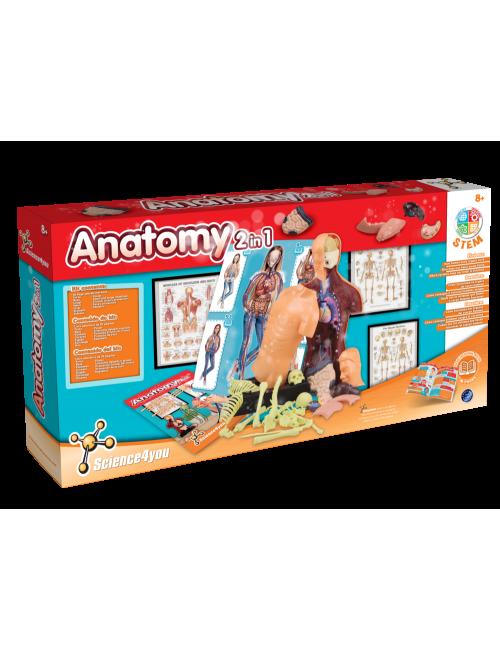 Anatomia 2 em 1